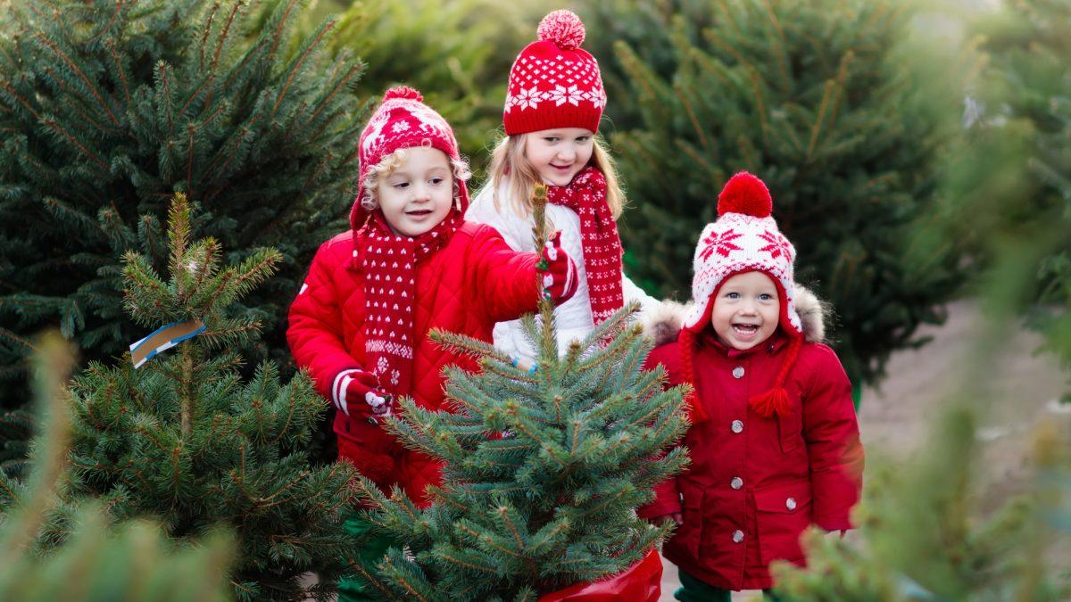 Arbutus Based Landscaping Gives Back This Holiday